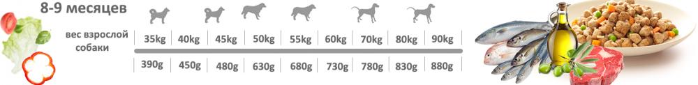 Adragna Breeder Professional Maxi Puppy