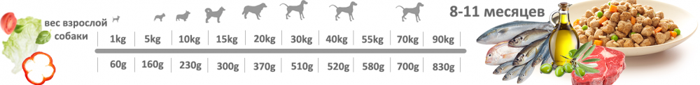Adragna Puppy all Size
